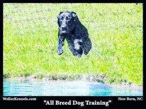 retriever dog training north carolina