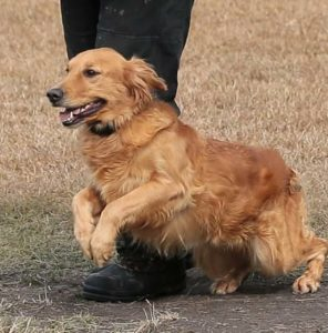 on / off leash training
