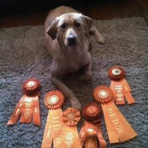 North Carolina Dog Trainers for Retrievers and Obedience Class