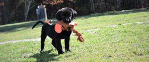 puppy breeding and training